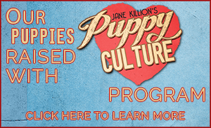 OUR PUPPIES RAISED WITH PUPPY CULTURE